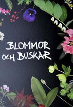 Blommor och buskar, Redaktör Bengt Persson, revidering och komplettering av växtporträtt av Kenneth Lorenzon, text av flera olika författare