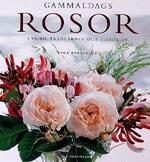 Gammaldags rosor i vasen, trädgården och historien