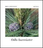 Odla barrväxter av Brita Johansson