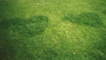 Prova att gödsla med urin och klipp ut ett hjärta i plast så får du en vackert mönstrad gräsmatta.