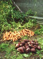 Rotsakerna skall tas upp ur jorden eftersom de inte växer mera.