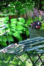 Växter för olika stilar i olika trädgårdar