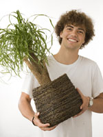 Skapa en sund inomhusmiljö med hjälp av växter
