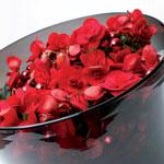 Begonia elatior 'Barkos'