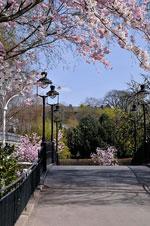 Blommande bro