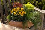 Erysimum 'Orange Zwerg', Euphorbia 'Efantia' och 'Thalia', Scirpus cernuus, murgröna