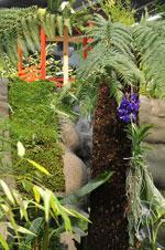 Monter Orkidéer på hög höjd