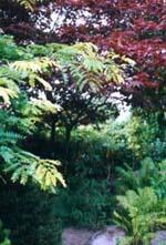 Robinia, japansk lönn och ormbunkar