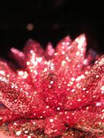 Diverse Echeveria-sorter finns det gott om, med eller utan färg och glitter...