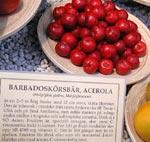 Barbadoskörsbär