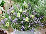 Agapanthus och Fritillaria