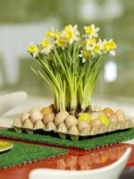 Narcissus amaryllidaceae 'Topolino'