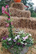 Arrangemang med trädgårdsredskap, Cedergrens
