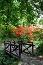 Azaleadalens bro med Azalea 'Koster's Brilliant Red'.