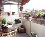 Lådor med barrväxter, vårljung, narcisser och krokus.
