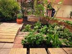 Barnens trädgård