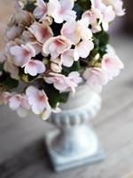 Knep för din begonia