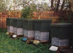 Det finns bin i dag som kan skötas utan att behöva rymddräkter.