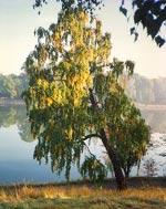 - Det är förunderligt att vattenytan kan vara så alldeles stilla. Tidiga morgnar kan vara verkligt speciella.