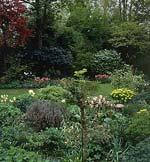 Lökväxterna ger tidig färgglädje i vårträdgården