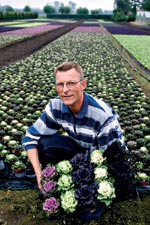 Prydnadskål, Brassica oleracea