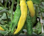 Chili Capsicum annuum 'Hot Lemon'
