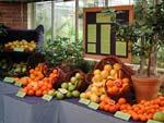 Citrus är ett stort släkt med många mycket användbara frukter.