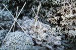 Stödkäppar på plats i väntan på vinterskyddsväv