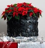 Enkelt men effektfull är den traditionella julstjärnan. Arrangerad i en rusitk kruka och dekorerad med julpynt passar den in i alla hem.