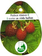 Etikett E-sorter av röda hallon
