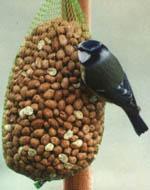 Glöm inte bort våra vänner småfåglarna.