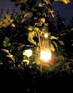 Tänd ljuslyktor i den mörknande natten.