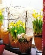 Narcissus cyclamineus 'Tête à Tête'