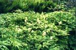 Grönt woodlandparti med ormbunkar i bakgrunden
