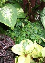 Blandade gröna växter