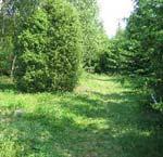 Skogsbrynen och hagmarkerna har i stort sett försvunnit.