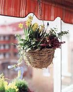 Pärlhyacinter, minipåskliljor, murgröna och vårljung.