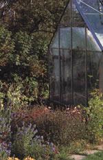 Höstfint i växthuset
