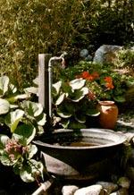 Trädgården och miljön - vatten