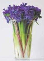 Hyacinten som snittblomma
