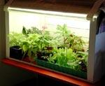 Här ses mitt inneväxthus, tidstyrt med timer, innehållande övervintrande sticklingar.