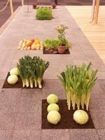 Grönsaksland i stenläggning