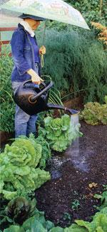 God jordstruktur är viktig för att ge växtrötterna en bra miljö. Jordförbättring är hjälpmedlet.
