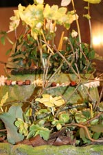 Julros i naturnära mossig kruka