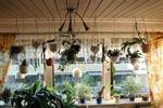 Kaktusfönster