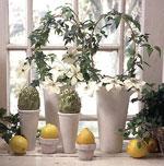 Blommande krukväxter