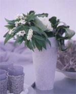 Korallranka med blad av anthurium samt narciss 'Ziva' arrangerade i en vas.