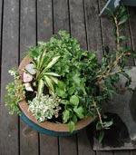 Solig kruka med gulbladiga växter.