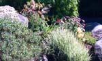 Solvända, backsippor och gräs
