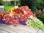 Nyplockade växter före torkning